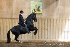 Bent Branderup and Tyson. An example of Academic Dressage done right. Loose reins, a perfectly collected, balanced horse. This type of exercise makes the horse stronger and sounder. The whip is never used to punish the horse, only for light touches as an extension of the rider's arm.