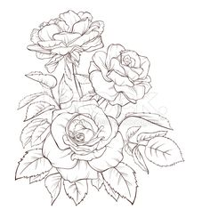 Rose flower. Hand-drawn contour lines and strokes. Element for design. royalty-free stock vector art