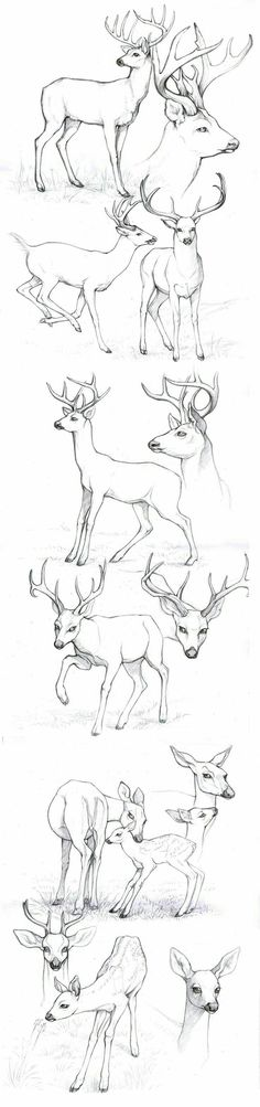 Animal Sketches, Animal Drawings, Drawing Sketches, Pencil Drawings, Art Drawings, Drawing Animals, Sketching, Drawing Tips, Drawing Ideas