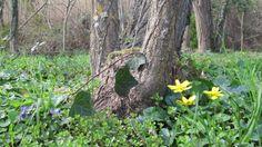 Llega la primavera a Can Bonet Turismo Rural - Sant Martí Vell - Girona - Catalunya Costa, Canning, Fruit, Plants, Plant, Home Canning, Planets, Conservation