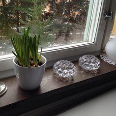 Hittade en passande kruka på ÖoB till mina nya pärlhyacinter. #blommor #växter #hyacinter #pärlhyacinter #kruka #blomkruka #vitt #öob #orrefors #hallon #ljuslykta #ljusstake #flowers #pot #hyacinth #plants #nordichome #candleholders #scandinaviandesign #scandinavianhome #interiordecorating #hallonlykta #myhome #rasberry