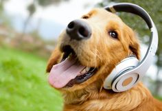 Cute dog listening to music^^