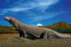komodo-dragon-habitat