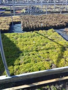This is a #nursery  #auction which is coming up this Thursday March 1. It consists of over 150,000 containerized #plants . This is #nursery stock grown on #longIsland. Which are used for #landscaping commercial and residential projects. Consisting of plants that attract #hummingbirds are #deerresistant, #nativeplant  species, and drought, sun and partial #shade, and #salt #tolerant species.