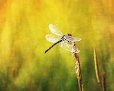 Dragonfly Art   Flickr - Photo Sharing!