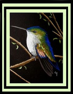 Art: Stripe-tailed Hummingbird 2a by Artist Cyra R. Cancel
