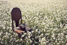 The old chair | Flickr - Photo Sharing!