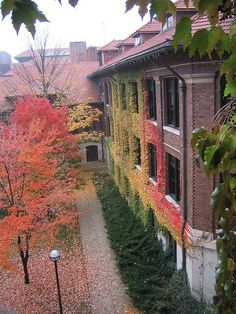 Boston Ivy changing color in the fall
