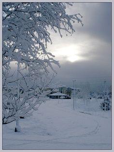 First snow, Turku, Finland Copyright: Anna KulikPadzik I Love Snow, Winter Love, Beautiful Winter Pictures, Turku Finland, Seasonal Image, Snow Covered Trees, Snow Pictures, Winter Magic, Winter Scenery