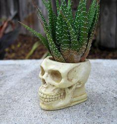 Skull succulent planter bone color skull pot casting stone plant container goth home decor spooky skull planter office desk decor (30.00 USD) by FairyTaleNightmares