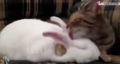 New trendy GIF/ Giphy. cat cute bunny lick licking animal friendship the dodo. Let like/ repin/ follow @cutephonecases