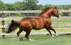 Down N Dash  (First Down Dash x Tell Her More)  2004 Sorrel AQHA Stallion