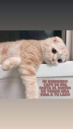 Cats, Animals, Frases, Bebe, Gatos, Animales, Animaux, Kitty, Cat