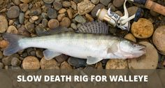 Fishing Rigs, Walleye Fishing, Fishing World, Fish Finder, Stick It Out, Death, River Fish, Outdoors, Pictures