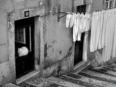 The white Cat | Fernando Machado