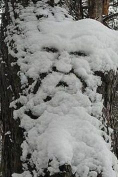 old man winter face in tree with snow - Google Search