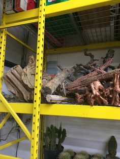 Cholla skeleton and wood pieces in our inventory
