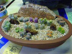 This is an awesome container of lithops!