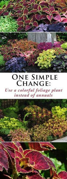 Use A Colorful Foliage Plant Instead Of Annuals