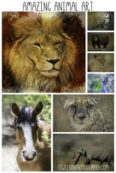 Check out all the amazing animal art at www.tlwilsonphotography.com  All of the images are available as poster or art prints (framed, canvas, metal, acrylic or wood.) Many are available as pillows, shower curtains, and other home decor items. All come wit