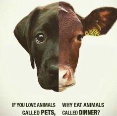 love them all go #vegan