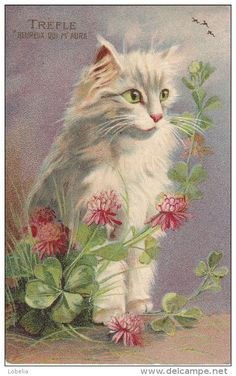 Pretty White Cat w/Pink Flowers Maurice Boulanger ♥•♥•♥