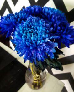 Синий, хризантемы, цветы