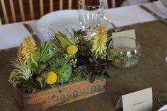 Table arrangements, Love the funky underwater feel of these plants