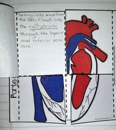 Human Body Systems - Science Interactive Notebook Activities