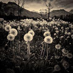 Explorations Aprile 27 2012, by LuGiais