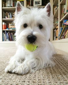 Having a ball today! Are you having a great relaxing Sunday?…