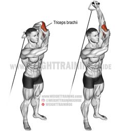 Standing overhead one-arm cable triceps extension. An isolation exercise. Target muscle: Triceps brachii. Synergists: None.