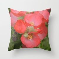 Apricot Mallow Blossoms Throw Pillow