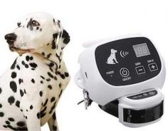 The 7 Best Wireless Dog Fence [2019 Reviews] - Pet Life World Wireless Dog Fence, Dog Nose, Pet Dogs, Pets, Dog Nails, Pet Life, Dog Behavior, Small Dogs