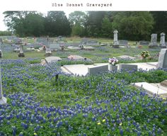 Lay me down in a field of Bluebonnets