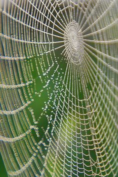 Spider Web with morning dew, like jewels strung on thin silver thread.  nature inspiring.