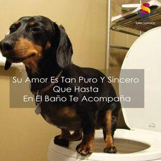 Foto: Digan Yo, Si Tú Perro Te Acompaña Hasta El Baño!!!