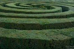 the maze: where everything happens.
