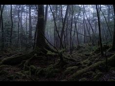 EXPLORING Suicide Forest | Aokigahara, Japan ( 青木ヶ原 ) - YouTube