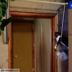 Cat High Fives His Workout Buddy | Gif Finder – Find and Share funny animated gifs