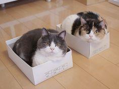 箱選び三年、詰め五年、猫一生