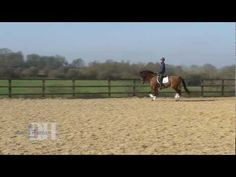 How to ride trot-walk-trot transitions with Anna Ross Davies.