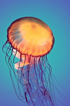 Beautiful Jellyfish                                                                                                                                                      More