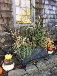Fall Canvas, Garden, Plants, Lawn And Garden, Gardens, Plant, Outdoor, Home Landscaping, Tuin