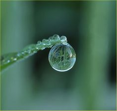 Water droplet on a green stem