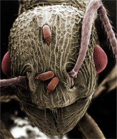 ant, looks like even he has parasite problems
