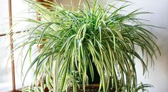 9 Houseplants That Clean The Air And Are Almost Impossible To Kill | Spirit Science