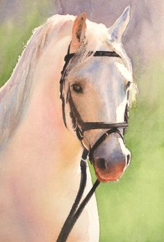 If you've ever wondered how to paint animals in watercolour - look no further than Glynis Barnes-Mellish's animal module she'll begin by teaching you how to paint this handsome horse!