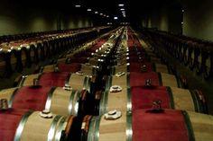 Medoc wine Premier Grand Cru matures in barrels at the Chateau Latour cellars in Bordeaux, southwestern France, november 5, 2000. REUTERS/Regis Duvignau
