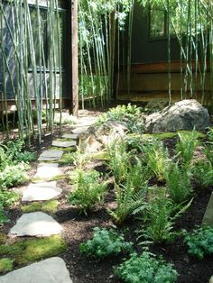 Fern, Moss, Bamboo, Stepping stones in woodsy garden